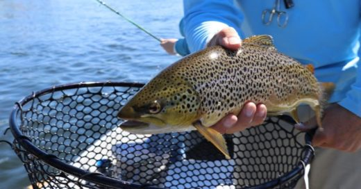Trout Fishing Tips for Beginners - Learn How to Catch Trout